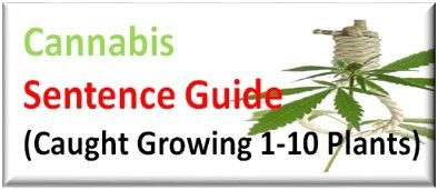 Caught with small scale 1-10 cannabis plants cultivation Sentence Guide UK
