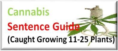 Caught Cultivating Cannabis a Class B Drug Sentence Guide for UK Courts