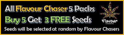 Flavour Chasers Limited Time buy 5 cananbis seeds get 3 Free of charge