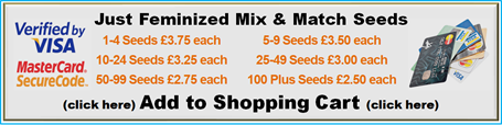 Mix & Match Single Feminized Cannabis Seeds Multi Buy Saving - Buy More PAY LESS