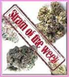 Strain of the Week Discount